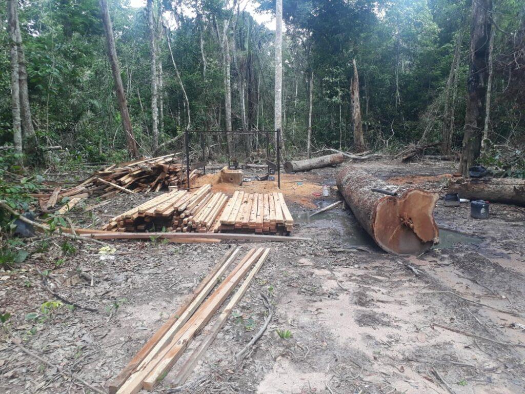 Illegal portable sawmill found in Seringueiras